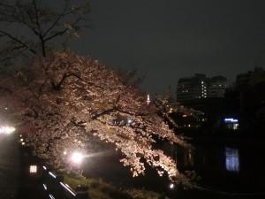 花の回廊ライトアップ2017.4.19_夜桜模様